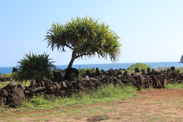 Hala tree